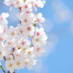 手厚いサポートで、春にあなたの花を咲かせましょう!